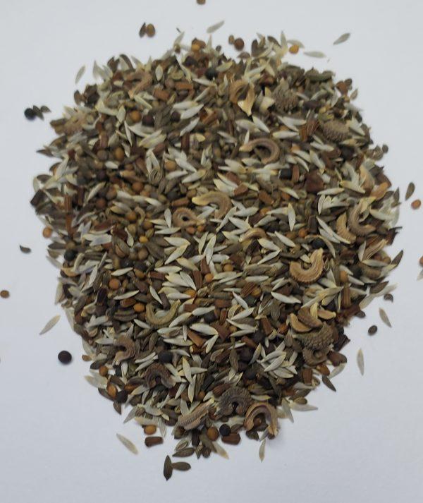 Showing Mesclun Mix seeds up close.